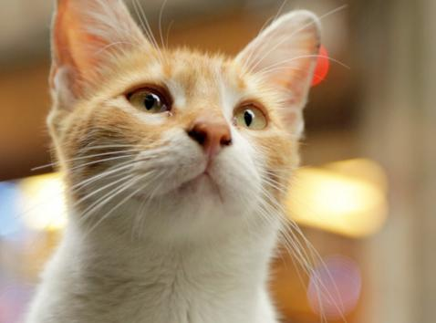 """""""Kedi"""" Documentary Sheds Light on the Life of Cats in Instanbul"""