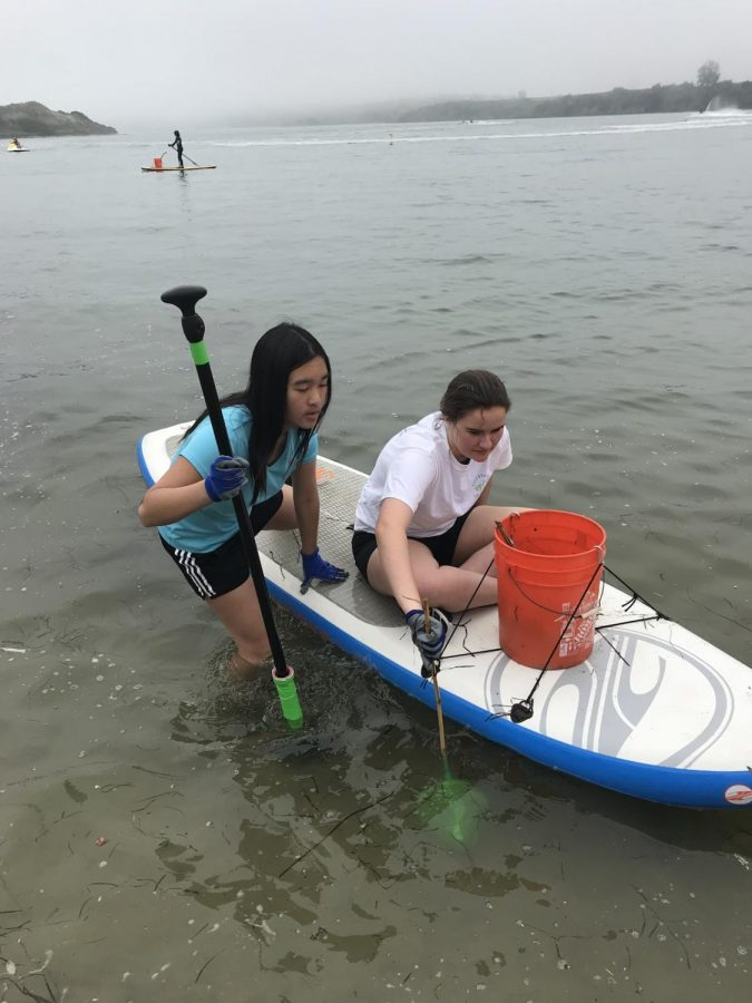 Juniors Amber Tse and Jenna Weinhofer work to clean out the Carlsbad Lagoon.