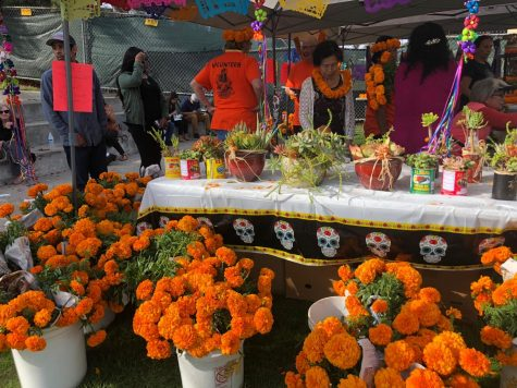 Marigolds are typically seen at Dia de Los Muertos celebrations because they are used to help guide spirits with their vibrant color.