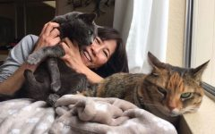 Japanese teacher Rie Tsuboi with her cats Shun (left) and Momo (right) which is a Chinese/Japanese character that means