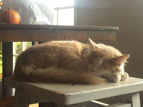 A peaceful, sleeping cat